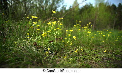 Wild flowers on a lawn in the forest