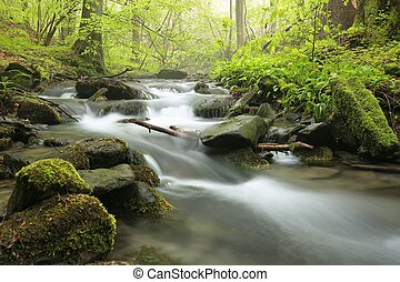 Forest stream on a foggy spring morning