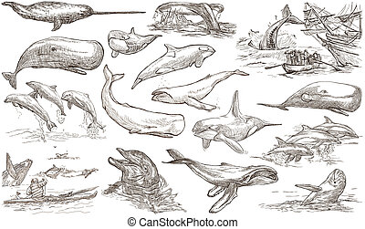 Cetaceans, Cetacea - An hand drawn pack, freehand sketching...