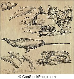 Cetaceans, Cetacea - An hand drawn vector pack, collection -...