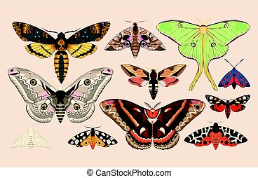 Set of moths and butterflies - Vector set of high detailed...