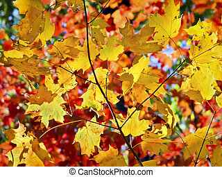 Fall Leaves Ablaze with Color