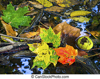 Colorful fall leaves in a puddle