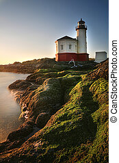 Image of a Lighthouse in Oregon, USA - Adorable Kittens in a...