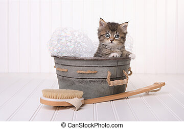 Cute Kitten in Washtub Getting Groomed By Bubble Bath -...