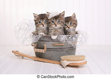 Cute Kittens in Washtub Getting Groomed By Bubble Bath -...