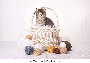 Cute Kitten in a Basket With Yarn on White - Little Cute...