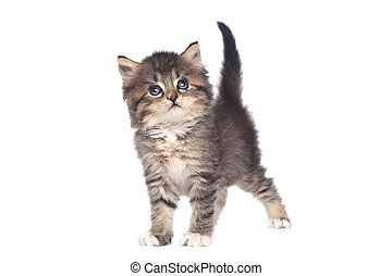 Cute Tiny Kitten on a White Background - Sweet Tiny Kitten...