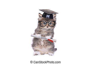 Kitten Graduating With Diploma - Adorable Tiny 4 Week Old...