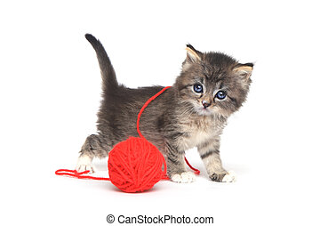 Tiny Kitten Playing With Red Ball of Yarn - Cute Tiny Kitten...