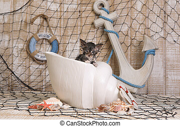 Dripping Wet Kitten on Ocean Themed Background - Adorable...