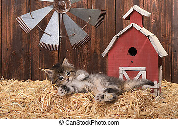 Cute Kitten in a Barn Setting With Straw - Adorable Kitten...