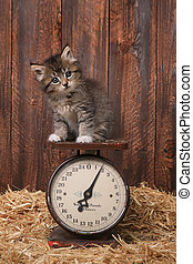 Adorable Kitten on Antique Vintage Scale - Cute Adorable...