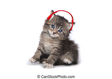 Kitten on a White Background Listening to Music - Tiny...