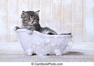 Tiny Kitten in a Bathtub With Bubbles - Adorable Tiny Kitten...