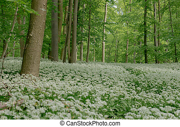 Germany: Spring In Lower Saxony