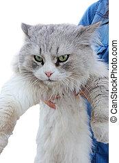 enojado, gato, Manos
