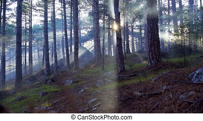 Morning fog in the summer forest in sunlight - Morning fog...
