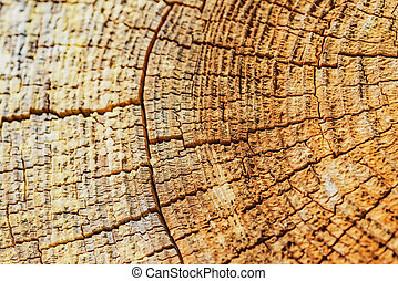 Cross section tree - Nature background. The structure of the...