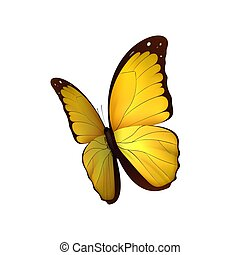 Butterfly yellow isolated on white background. Butterflies...