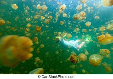 Tourist snorkeling in Jellyfish Lake - Underwater photo of...