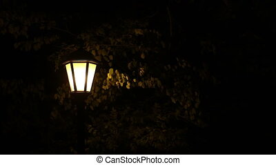 street light under trees at night