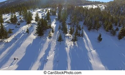 Aerial Snow Covered Trees. Landscape Winter Nature Forest....