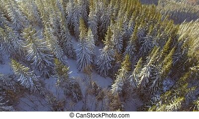Aerial view of Trees forest woods. Snow winter season....