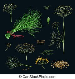 Dill set. Hand drawn colorful collection with greens, bunch, branch, flower, inflorescence, seeds. Vector illustration on black background.