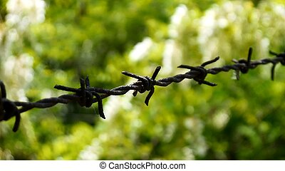 Barbwire against green background