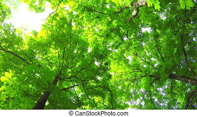 Summer Deciduous Forest. - A Light Breeze in the Summer...