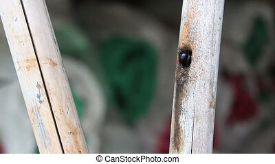 black bumble bee in bamboo hole - black bumble bee in bamboo...