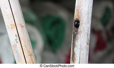 black bumble bee in bamboo hole - black bumble bee in bamboo...