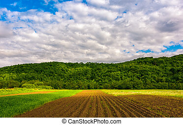agricultural field in mountains. trees behind the grassy...