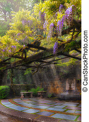 Wisteria Flowers Blooming on Trellis over Water Fountain -...