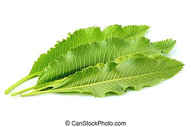 Horseradish leaves isolated. - Horseradish leaves isolated...