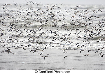 Flock of birds at the beach
