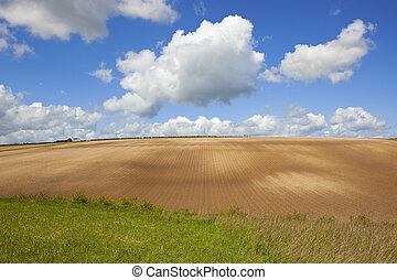 cultivated hillside - a cultivated hillside with an un used...