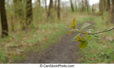 Forest. Spring scenery with tree twig. Saturated green on picking leaves.