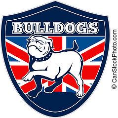 Proud English bulldog British flag