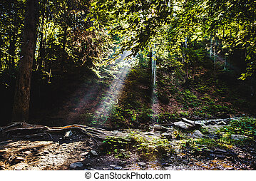 Sunlight breaking through the trees at a mystical lane.