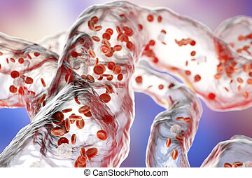 Blood vessels with flowing blood cells - Network of blood...