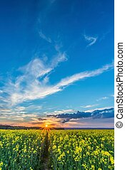 Photo of rapeseed field with sunset and dramatic sky
