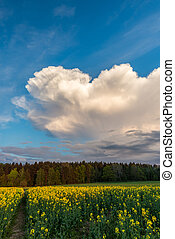 Big cloud over rapeseed field and forest