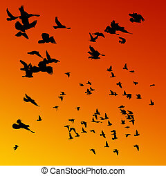 Pigeons flying at sunset.
