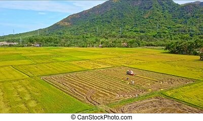 Drone Flies Over Tractor Reaping Harvest on Rice Field -...