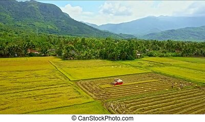 Drone Flies Over Tractor Driving Harvesting on Rice Field -...