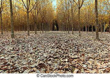 fallen dried leaves in forrest - background of fallen dried...