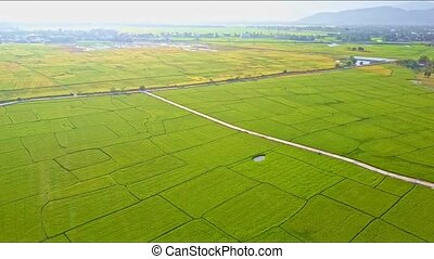 Aerial View Over Rice Field with Road and Small Lake -...