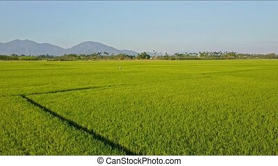 Aerial View Small Figure Plays among Green Rice Fields -...